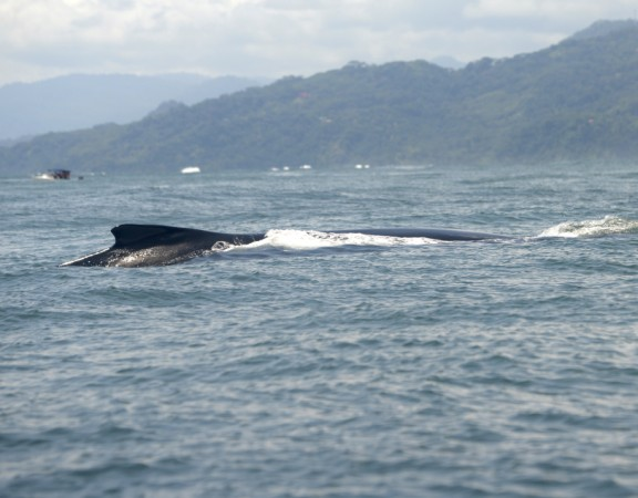 Tourism of whale watching tripled
